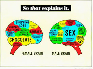 male brain and female brain structure